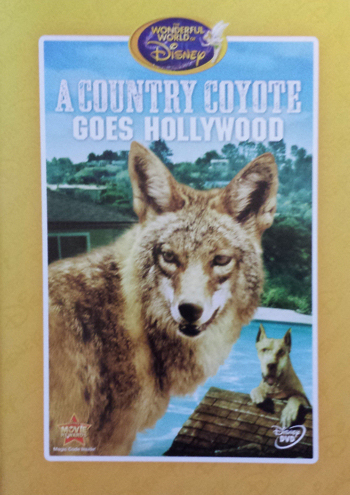 Jaquette Un Coyote se Rend à Hollywood