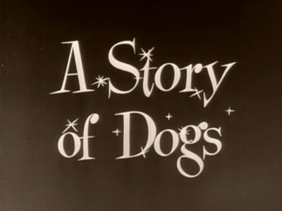 A Story of Dogs