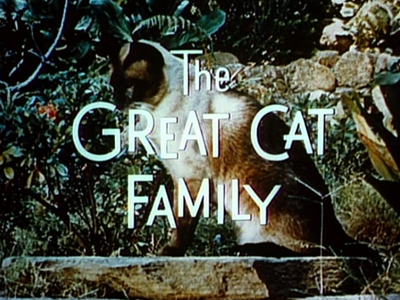 The Great Cat Family