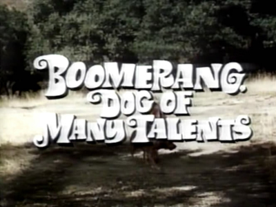 Boomerang, Dog of Many Talents