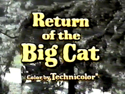 Return of the Big Cat